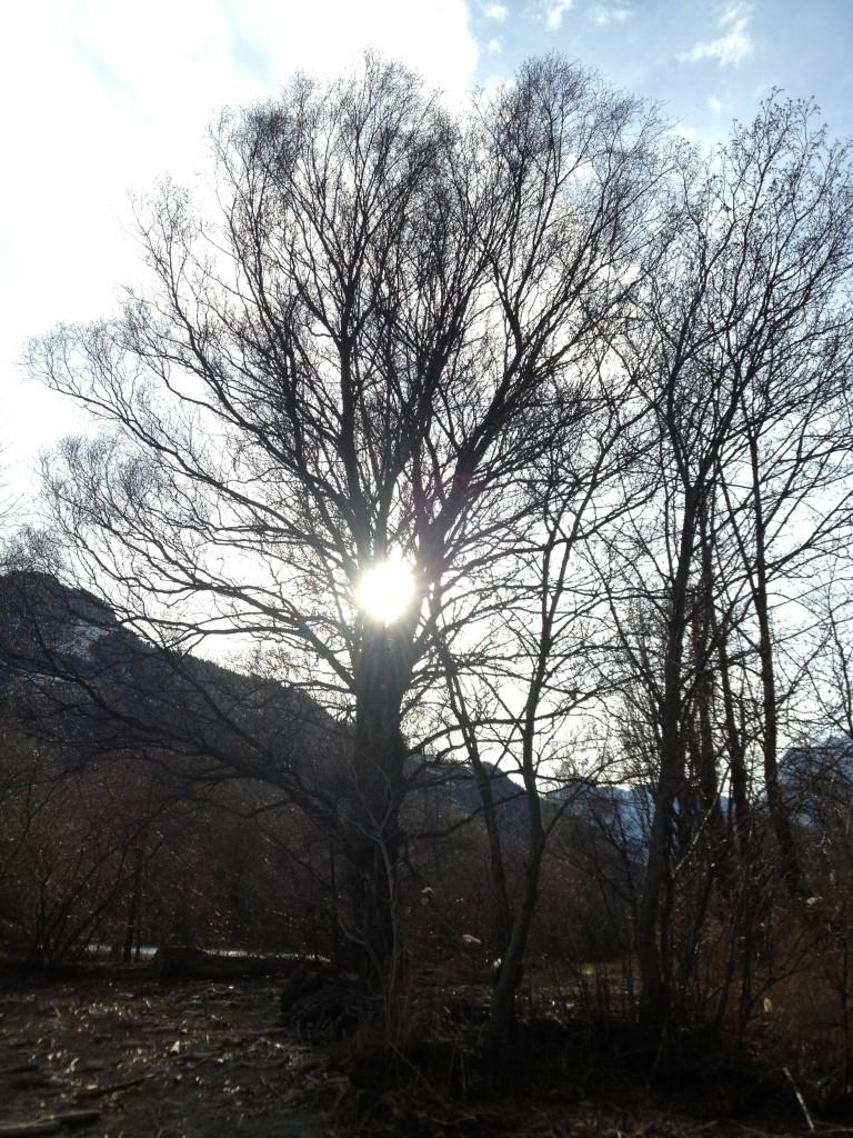 2012_12_25_Sonnenbaum